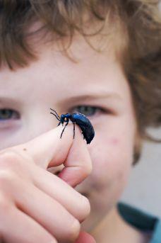 Oil Beetle by Richard Clarke ©