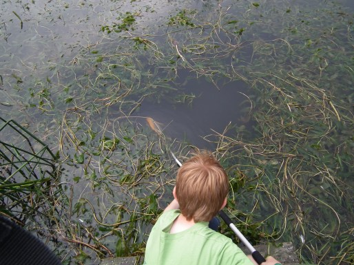 Dominic Pond Dipping